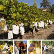 Hohe Qualität Weiß All-Holz Zellstoff Micropore Papier Obst Traube Papier Wachsende Schutztasche mit verzinktem Draht