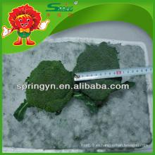 2015 Nuevo Cultivo 4-8 cm brócoli congelado brócoli al por mayor verde