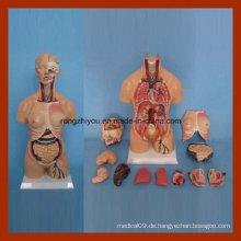 55cm Menschliche Anatomie Doppel Geschlecht Torso Model (15 PCS)