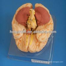 ISO Deluxe Gehirn Anatomisches Modell, menschliches Gehirnmodell