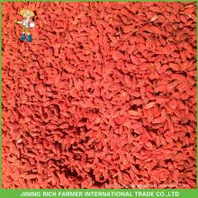 Frescas bayas de goji de China con buen precio