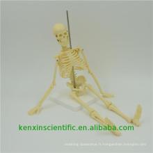 Modèle de squelette PNT-0107 best-seller anatomique