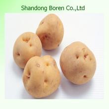 Fresh Potato 10kg Mesh Bag