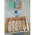 Chinesische normale weiße Knoblauchernte 2017 1kgx10 im 10kg Karton