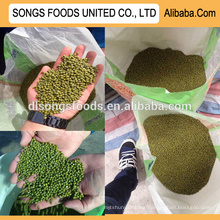 New crop hot sale green mung beans specification