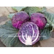 Chinesisches Purple Cabbage Gemüse