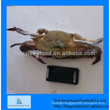Frozen crabs the price