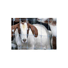Factory Direct Sale Galvanized Field Cattle Fence