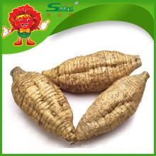Kudzu salvaje chino orgánico del 100%