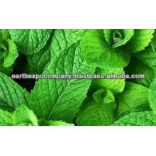 Spearmint from India