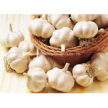 Chinese Fresh Pure White Garlic
