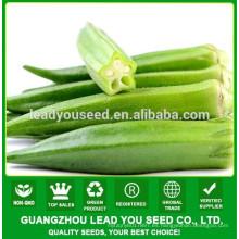 NOK01 Siqu semillas híbridas de okra, precio de semillas de okra