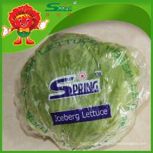 Organic forma redonda iceberg lechuga