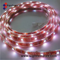 IP20 SMD 5050 LED Strip Light
