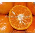2017 новый оранжевый урожай с низкой ценой