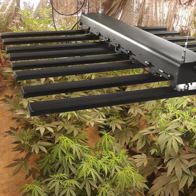 Supplemental Lighting for Flowering