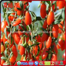 100% organic dried goji berry goji berries gnc de g with reducing weight