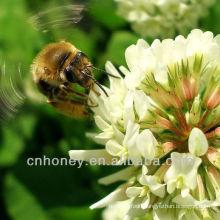 organic natural pure clover honey