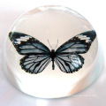 Paperweight de cristal transparente do arco - logotipo livre da gravura