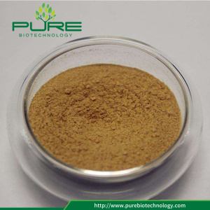 Herbal Extract Organic Maca Root Extract / Maca Rotpulver