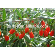 High Quality Wolfberry Extract