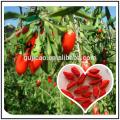 nueva cosecha Goji Wolfberry fruta Goji Berry Ningxia Goji hierba china medicina wolfberry