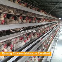 Malla de alambre galvanizada diseño Tianrui Jaula de pollo Chiken