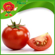 Exportación de tomate fresco