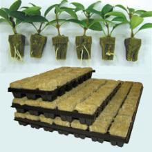 Agriculture Rockwool Cubes bon marché Système aquaponique Laine de roche hydroponique