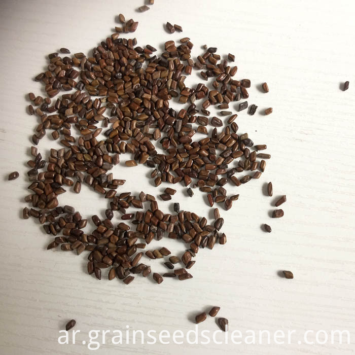 cassia seed