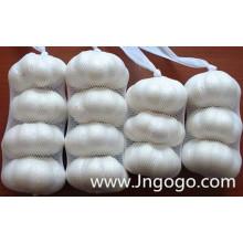 Alho branco normal da boa qualidade nova da colheita 5,0