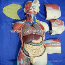 85CM (20 Teile) Anatomische menschliche Anatomie Dual Sex weiblich und männlich Torso Modell