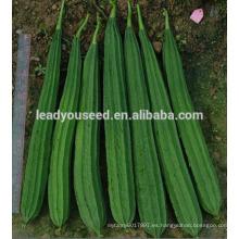 MLU01 Chuanggua fuerte híbrido a prueba de calor híbrido Luffa semillas para plantar