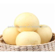 Neue Ernte frische goldene Birne süße knackige Birne Shandong Birne
