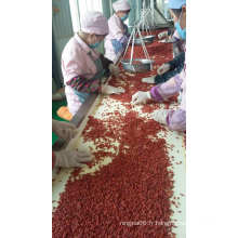 Baies de Goji biologiques certifiées USDA, baie de Goji de Ningxia, cerisier de Chine