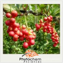 Schisandra Extract 4 to 1 Kadsura longipedunculata