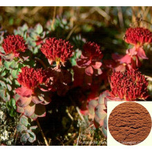 Rhodiola Rosea Extract, Salidroside Powder, Rhodiola Rosea Extract Salidroside Rosavin