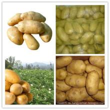 Gute Qualität Frische Kartoffel für Verkauf