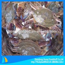 Fournisseur de crabe de natation bleu de meilleure qualité congelé
