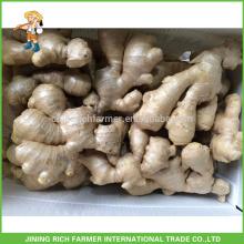 Gengibre fresco Exportador chino jengibre 250g hasta 30 libras caja de PVC