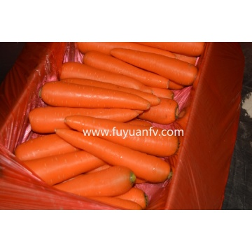 New Crop 2020 Fresh Carrot