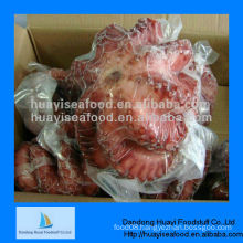 IQF whole frozen octopus seafood