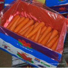 Calidad superior de la zanahoria china fresca