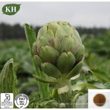 Natural Cynara Cardunculus extrato de alcachofra Caffeoylquinic Acids