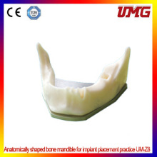 New Listed Dental Models with Low Price Human Teeth Model