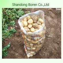 Vente en gros de pommes de terre fraîches de haute qualité