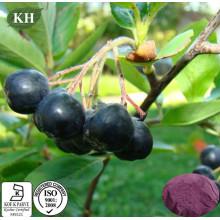 Extracto de Chokeberry natural puro natural Polyphenol 10% -30%; Antocianidina 1% ~ 25%