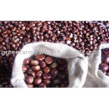 chestnut for sale