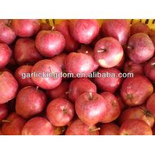 Manzana Gansu / Manzana fresca huaniu / Huaniu de origen