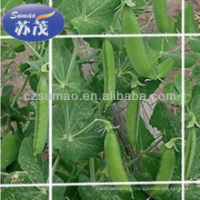 Extruded Plant Support Netting 8gsm For Agriculture Farm , Flower Or Bean
